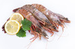 big fresh tiger prawns