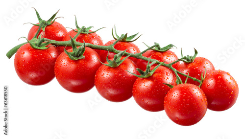 Branch of cherry tomatoes with drops
