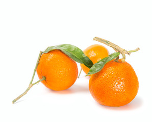 Citrus fruits on white background