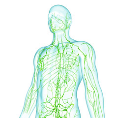 Anatomy of male lymphatic system