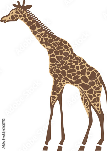 Giraffe- vector illustration