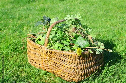 Tuinposter Paardebloem panier de mauvaises herbes, désherbage manuelle
