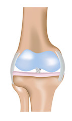 The Knee Joint Diagram