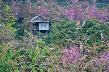 A house on the mountainin the northern of Thailand