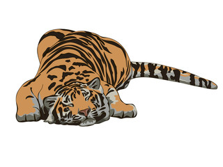 Sleeping tiger drawing