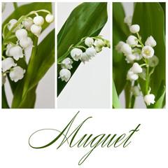 composition Muguet