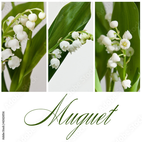 canvas print picture composition Muguet