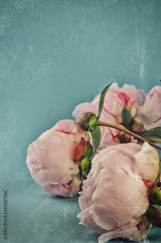 Vintage background with pink peonies