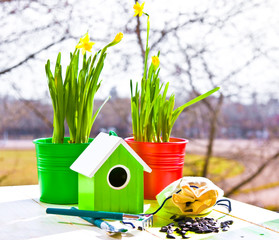Green bird house and Narcissus in pots, shovel and seeds