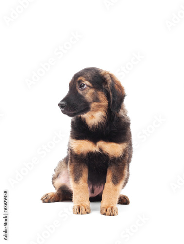 dog on a white background isolated