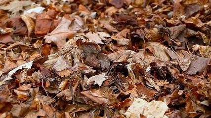 Old autumn leaves