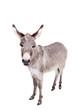 Leinwanddruck Bild - Pretty Donkey isolated on the white background