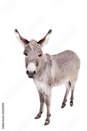 Plexiglas Ezel Pretty Donkey isolated on the white background