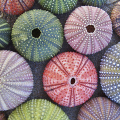 a collection of colorful sea urchins on wet beach