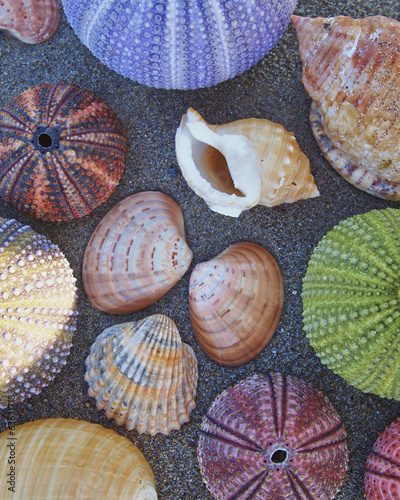a collection of sea urchins and shells on wet beach