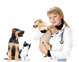 vet and Puppy and kitten