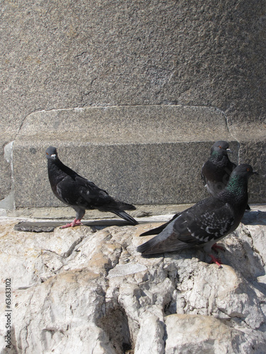pigeons on the statue