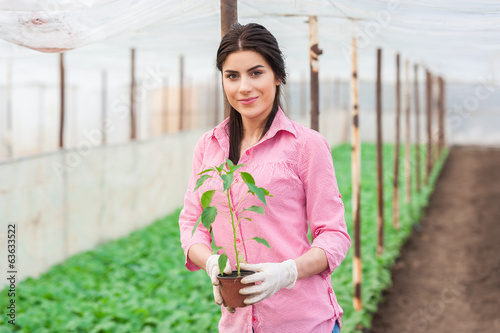 woman worker holding a pepper seedling pot