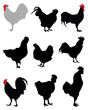 Black  silhouettes of roosters and hens, vector