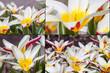 canvas print picture - Frühlingsblumen