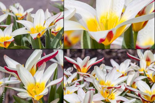 canvas print picture Frühlingsblumen