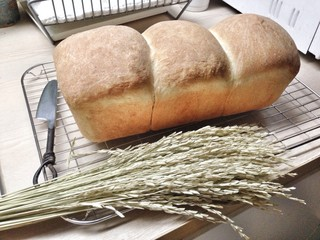bread for health