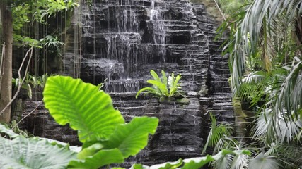 Falls in the jungle. Streams of water fall from the rock