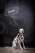 Dalmatian dog on black dreaming about a bone in a thought bubble