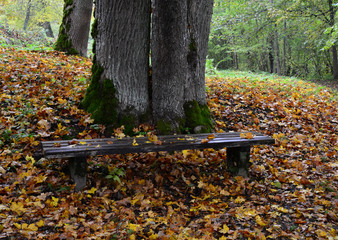 Old bench with orange leaves in the forest