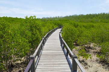 The forest mangrove at Petchaburi, Thailand.
