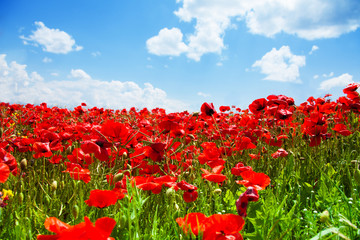 Red poppies field and sky