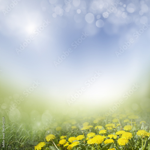 spring background . dandelion in a meadow