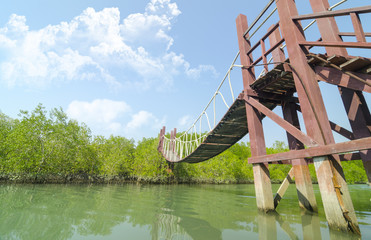tropical mangrove forest with blue sky in Thailand