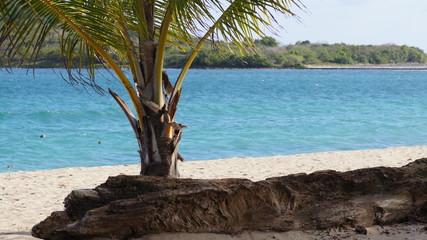 Playa de Sun Bay, en Vieques, Puerto Rico