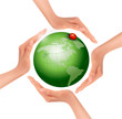 Hands holding a green earth with a ladybug. Vector.