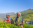 Two Tea Pickers Smiling As They Pick Leaves