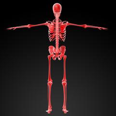 3d rendered red skeleton