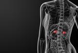 Female adrenal anatomy x-ray