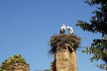 Morocco. Rabat. Storks on necropolis ruins Shells