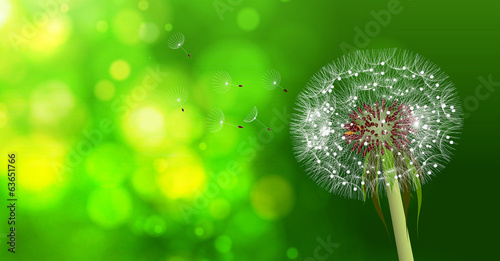 Dandelion on blurred green bokeh background.