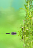 bambous zen