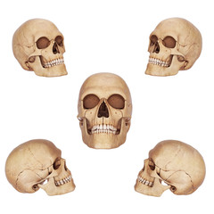 five skulls defferent view