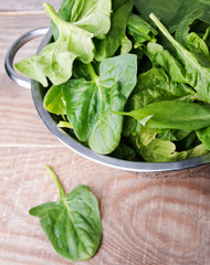 Fresh spinach and sorrel
