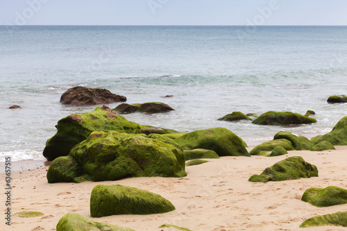Atlantic ocean coast with green stones in algae. Tangier, Morocc