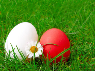 Easter eggs on green meadow.
