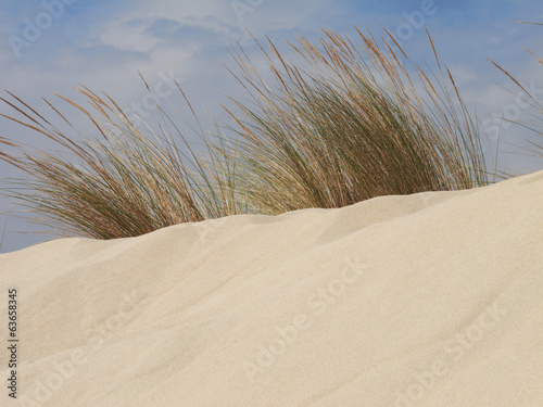 Sand dunes detail with plants and blue sky.