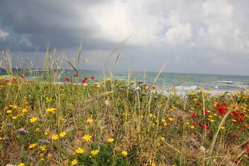Пахнет морем , цветами и дождем !