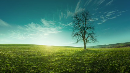 A lone tree on a meadow at sunrise, idyllic, fabulous landscapes