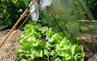 Salatbeete Sonne Luft