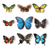 Fototapety Stuffed insects Butterfly collection